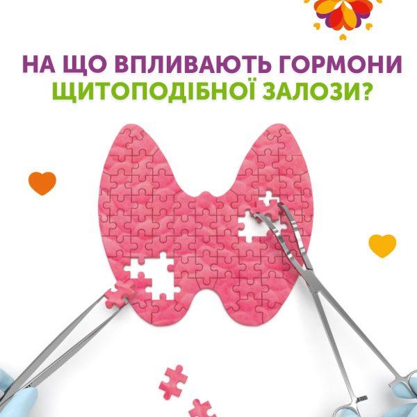 На що впливають гормони щитоподібної залози